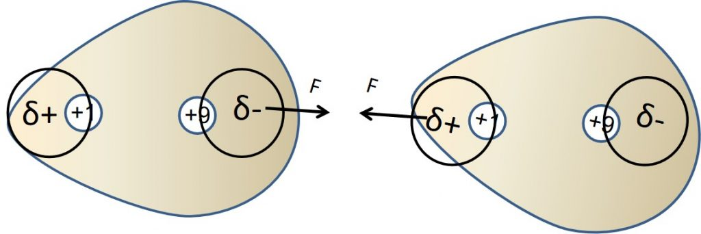 משיכה הין שתי מולקולות של מימן פלוארי