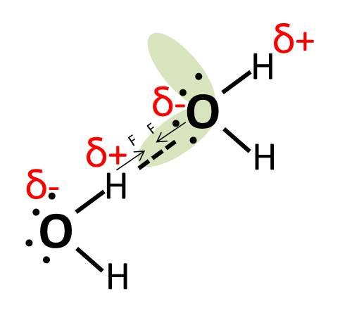 קשר מימן בין שתי מולקולות של מים עם תיאור המטענים החלקיים וכוחות המשיכה